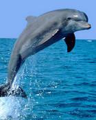 dolphin1.jpg