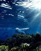 under water 1.jpg