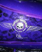 Harley Davidson Skulls.jpg