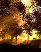 asian forest.jpg