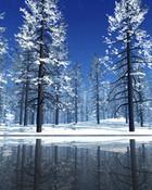blue forest 1.jpg