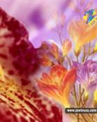 Flower030_800.jpg