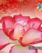Flower040_800.jpg
