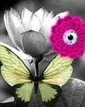 Free lotus.jpg phone wallpaper by saibaba