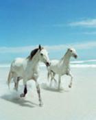 white horses.jpg