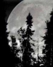 Free moon phone wallpaper by famousxzero