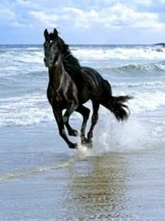 Free runing black horse.jpg phone wallpaper by cally