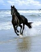 runing black horse.jpg wallpaper 1