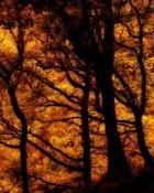 fuji forests.jpg