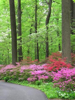 Free pink flowers in forests.jpg phone wallpaper by cally