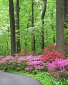 pink flowers in forests.jpg wallpaper 1