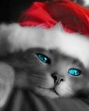 Free santa kitty.jpg phone wallpaper by cally