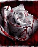 Free blood rose l09.jpg phone wallpaper by cally