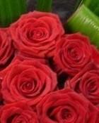 roses lo9.jpg