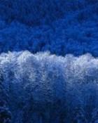blue frost n01.jpg