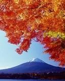 Free distant peak n01.jpg phone wallpaper by cally