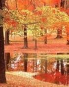 fall reflection n01.jpg wallpaper 1