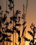 weeds n09.jpg