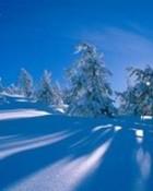 winter shadows n05.jpg