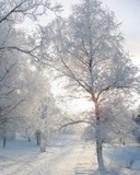 winter trees n07.jpg