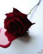 th_thBleeding_Rose_red_right[1].jpg