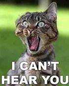cat-scream.jpg