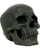 img_skulls_RN0001.jpg