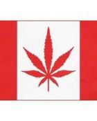 jane flag.jpg